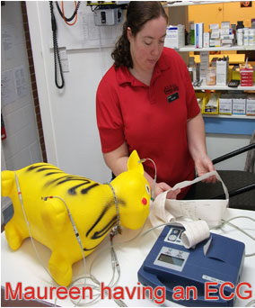 Henderson Valley Vet  - Maureen having an ECG