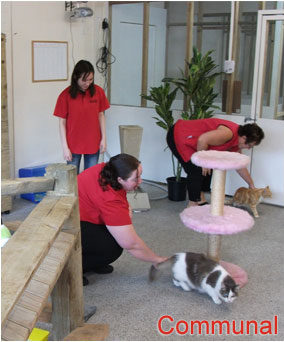 Henderson Valley Cattery