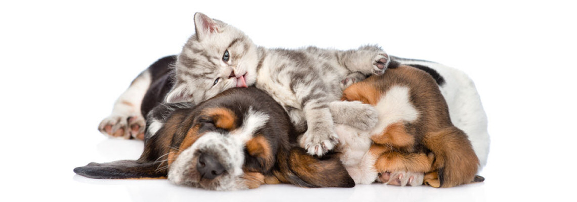 Henderson Valley Vet - pups and kittens